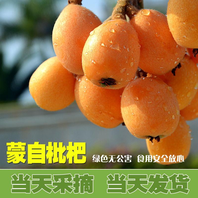 云南蒙自甜枇杷 新鲜水果大琵琶5斤装