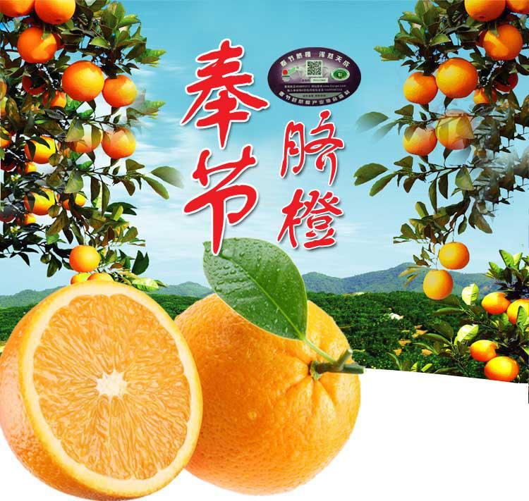 正宗奉节脐橙果园新鲜采摘10斤78元