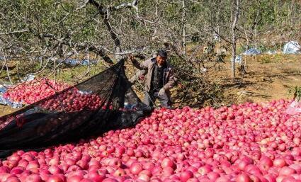 农产品滞销,电商打开新销路